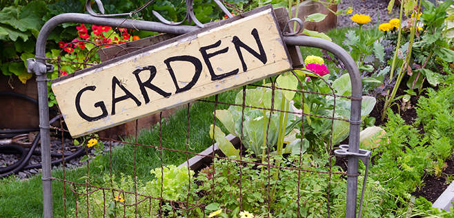 How to Design a Food Garden