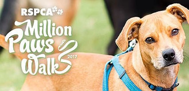 LJ Hooker join in Million Paws Walk